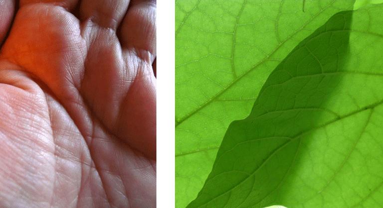 Photo d'une feuillle et d'une main illustrants le massage